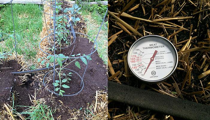 straw bale gardening update alice fuller